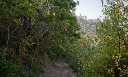 Kemon e Fai insieme per il Bosco di San Francesco ad Assisi